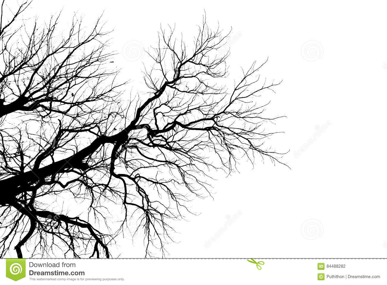 Tree Branch Silhouette Without Leaves Stock Photo