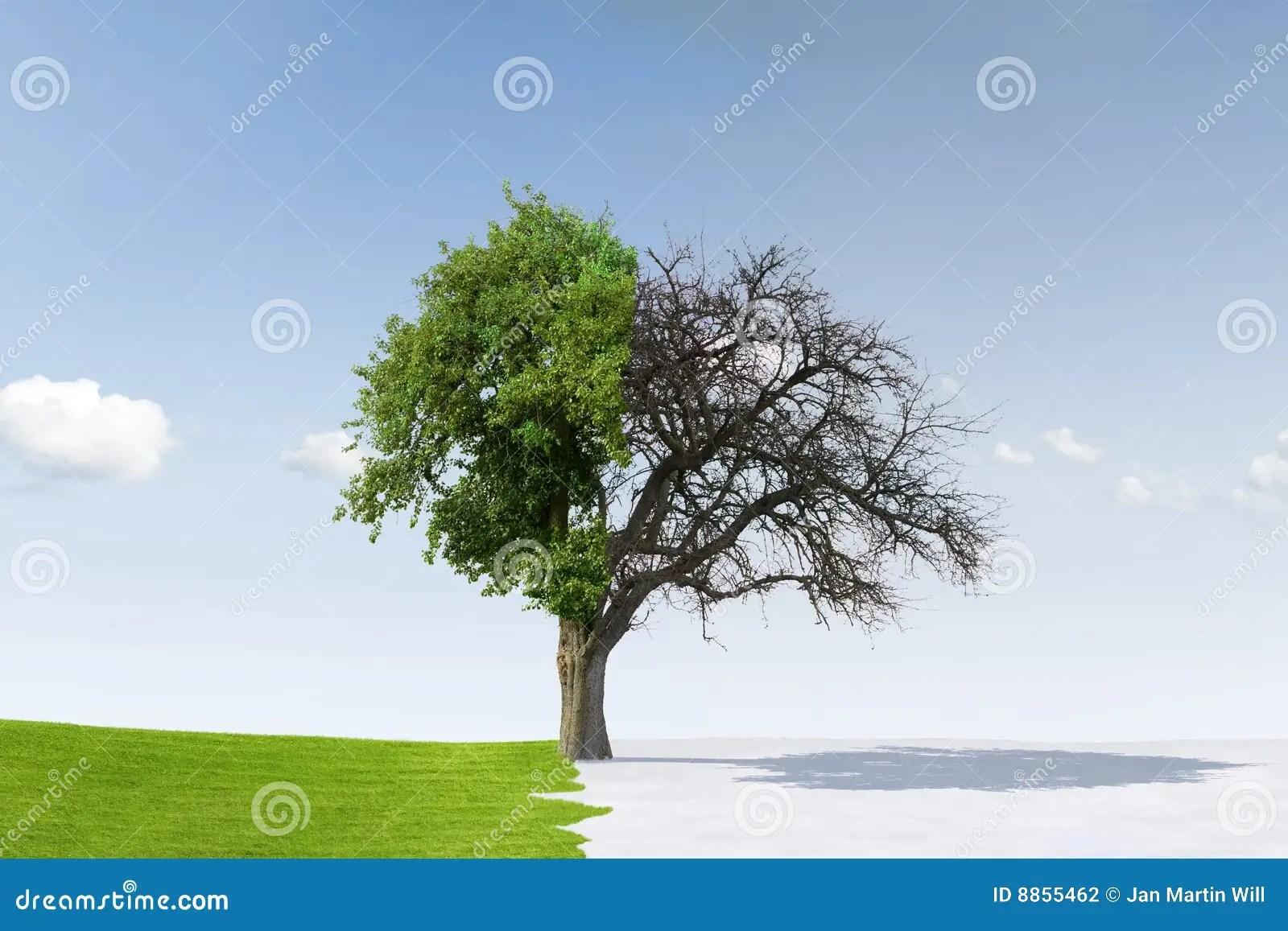 Tree Changing Seasons Stock Photo Image Of Leafy