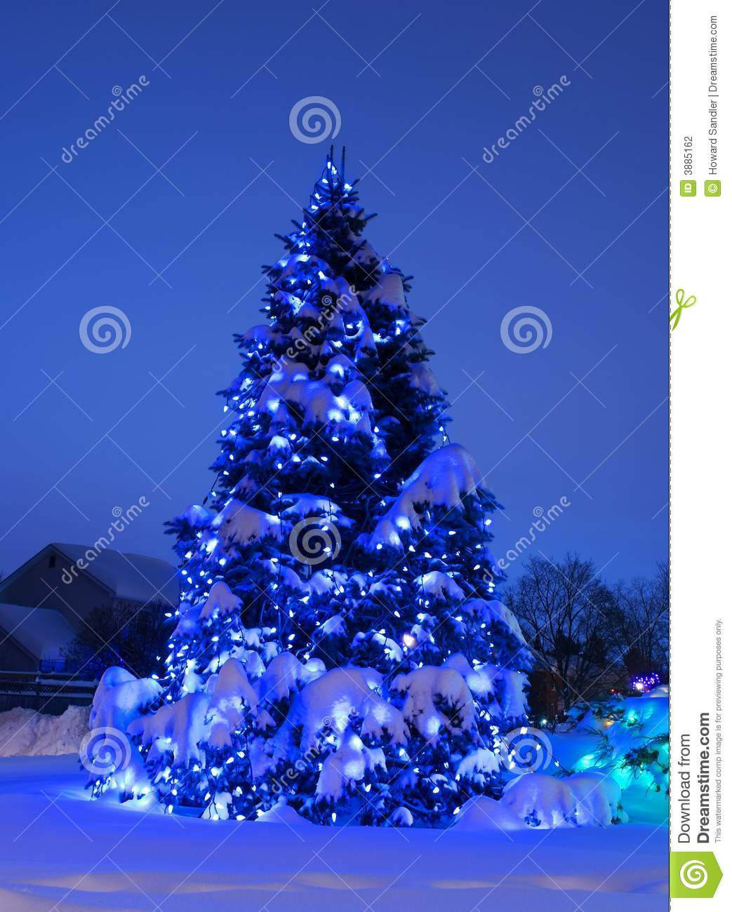Tree With Christmas Lights In Blue Stock Photo  Image