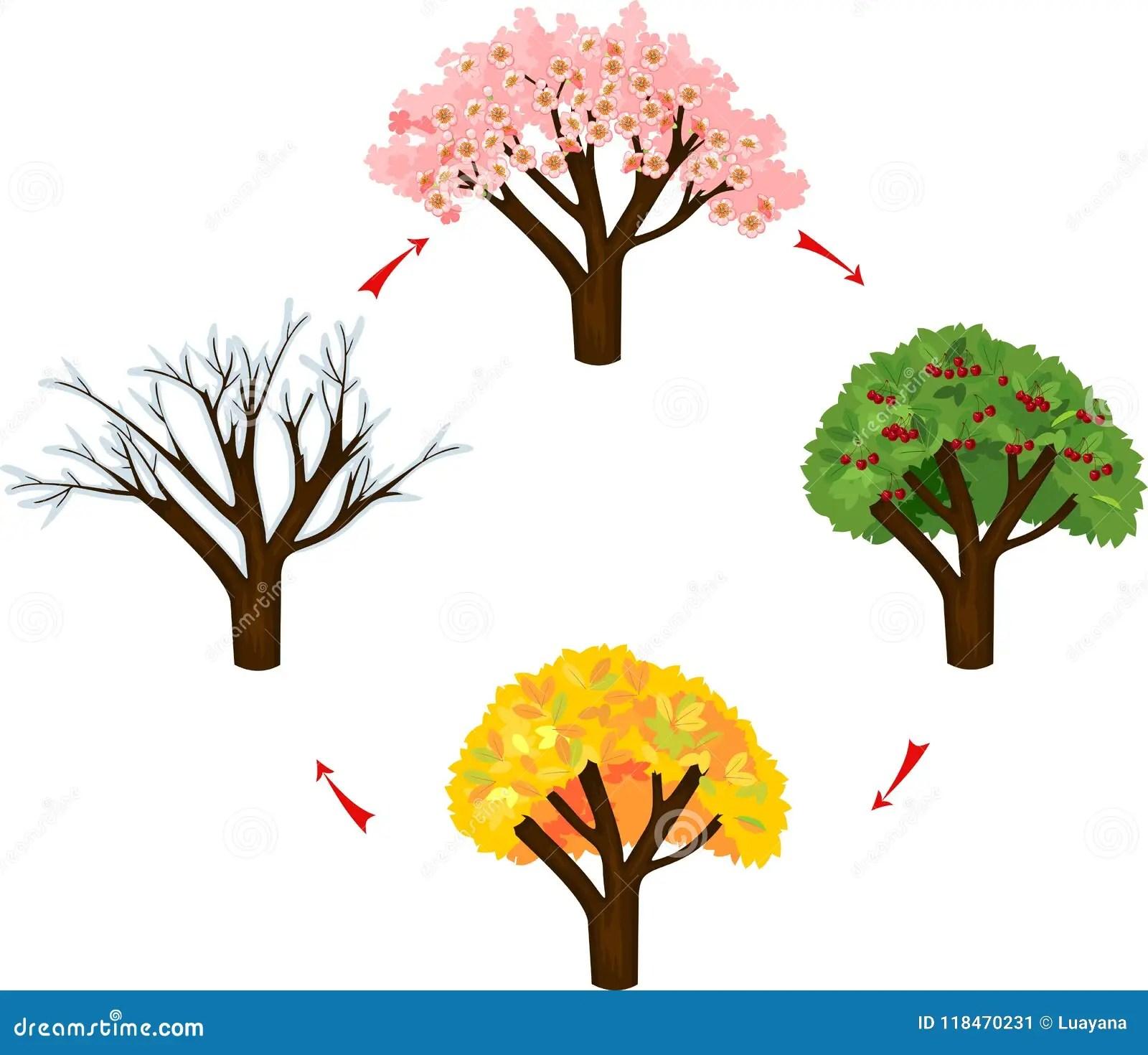 Tree At Four Seasons Stock Vector Illustration Of Sakura