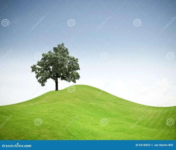 Tree Green Grass Hill Stock - 6018833