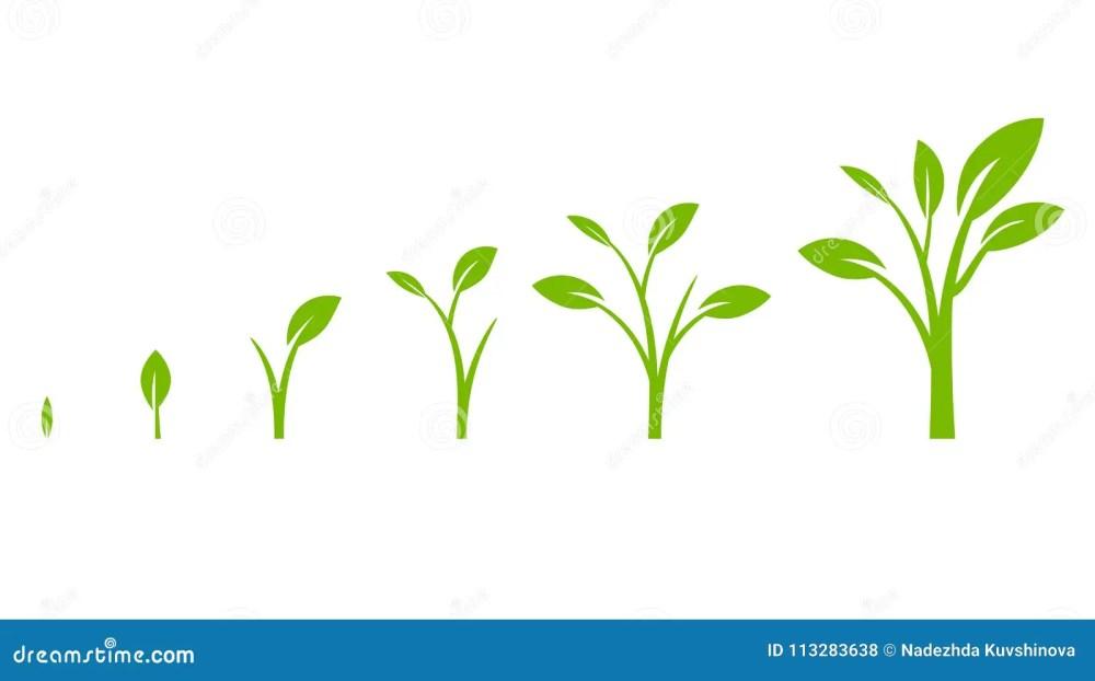 medium resolution of tree growth diagram with green leaf