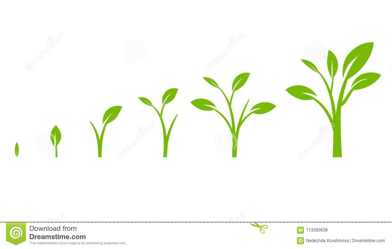 hight resolution of tree growth diagram with green leaf