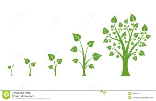 small resolution of tree growth vector diagram