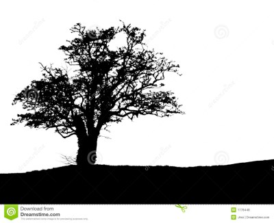 Tree Silhouette With Copy Space Royalty Free Stock Photos ...