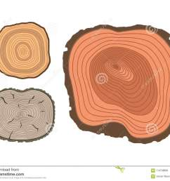 tree wood trunk slice texture circle cut wooden raw material vector detail plant years history textured [ 1300 x 1084 Pixel ]
