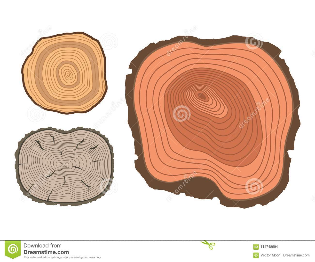 hight resolution of tree wood trunk slice texture circle cut wooden raw material vector detail plant years history textured