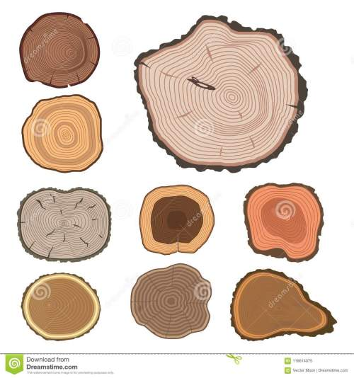 small resolution of tree wood trunk slice texture circle cut wooden raw material vector detail plant years history textured