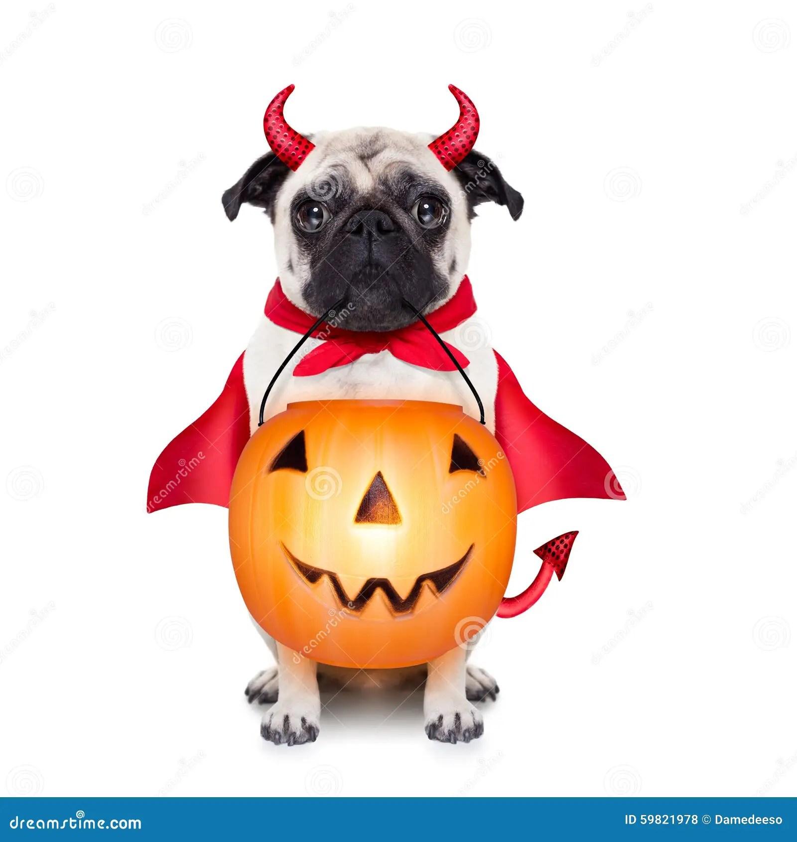 Trick Or Treat Dog Stock Photo Image 59821978
