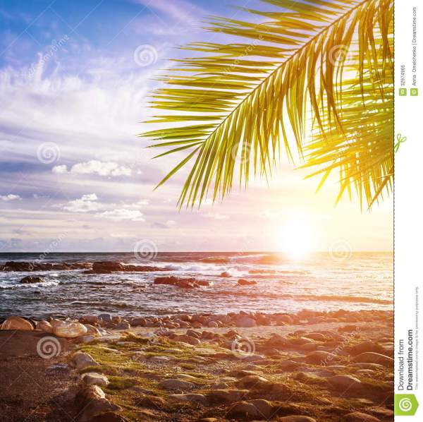 tropical beach royalty free stock