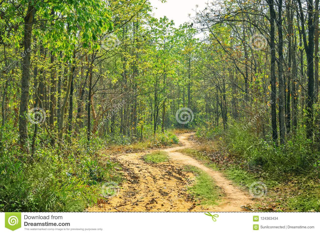 Considering the present value, it was very less than that of eastern ghats and western ghats. Tropical Dry Deciduous Forest Stock Photo Image Of Background Environment 124363434