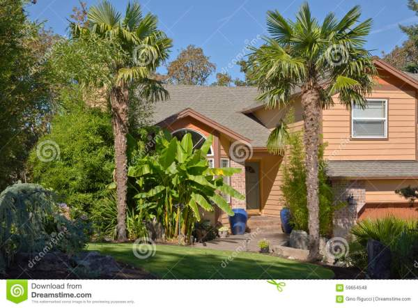 tropical home with palm trees