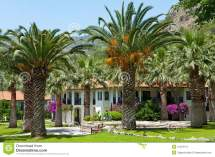 Tropical Hotel With Palm Trees Stock - 31423113