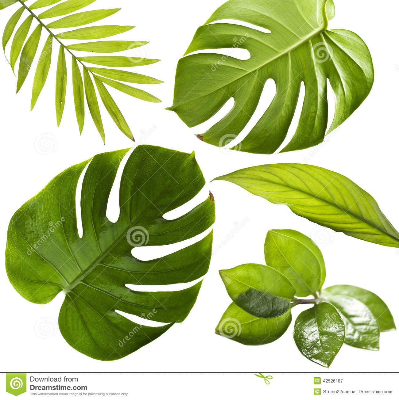 Tropical Leaves Stock Image Image Of Plants, Juicy, Bush