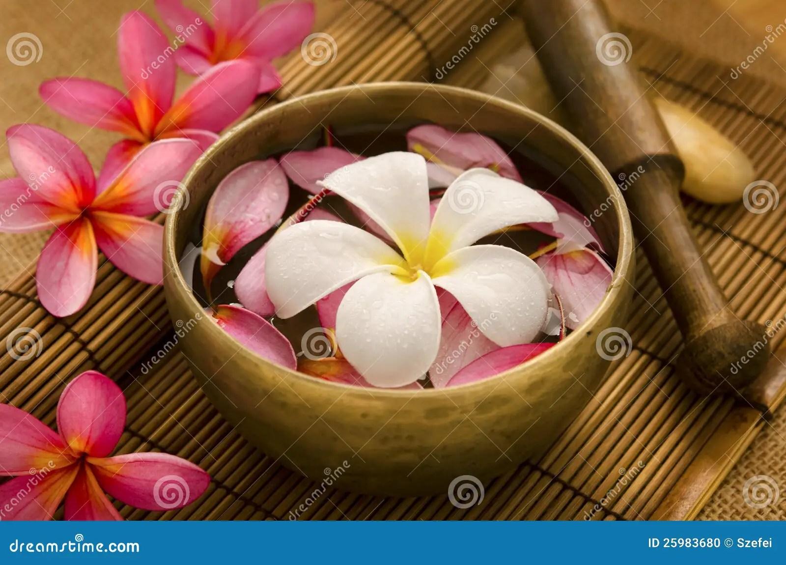 Tropical spa terugtocht stock foto. Afbeelding bestaande uit roze - 25983680