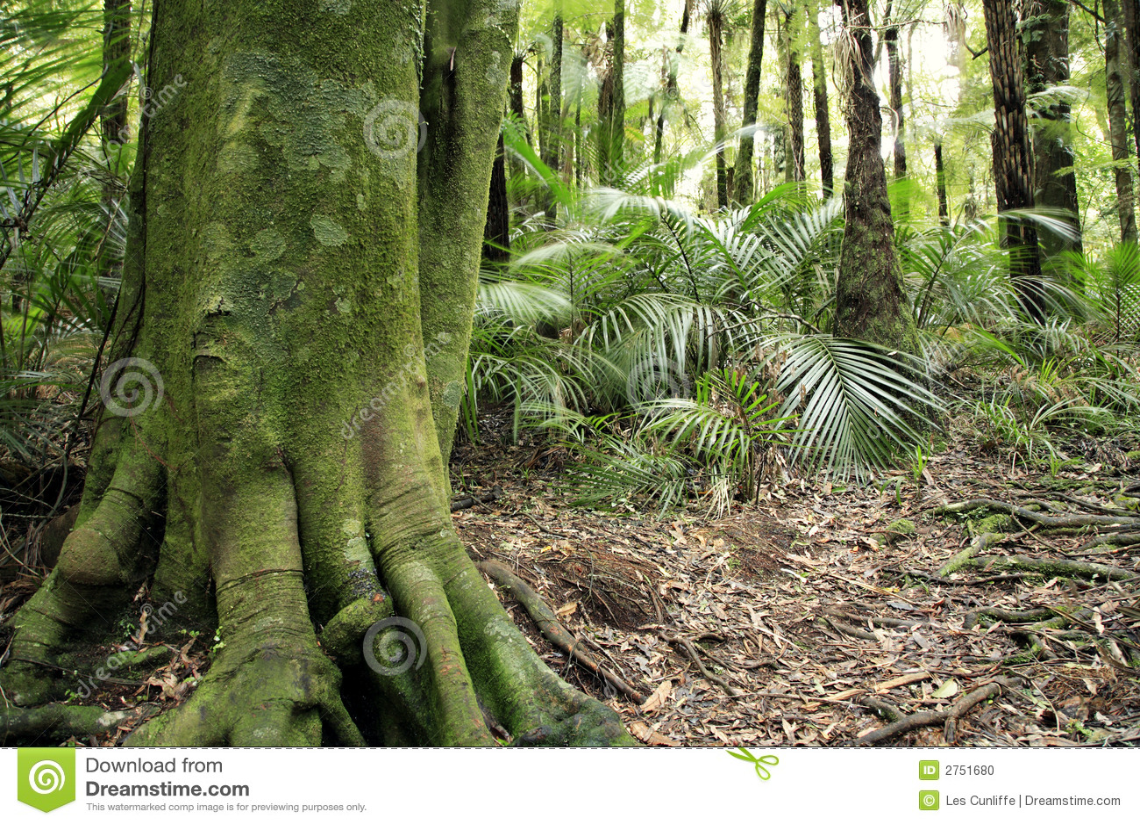 Tropical Tree Stock Photo Image 2751680
