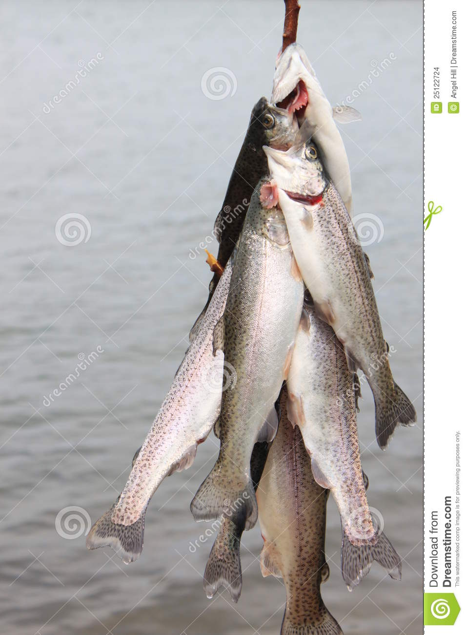 Trout On A Line Stock Images Image 25122724