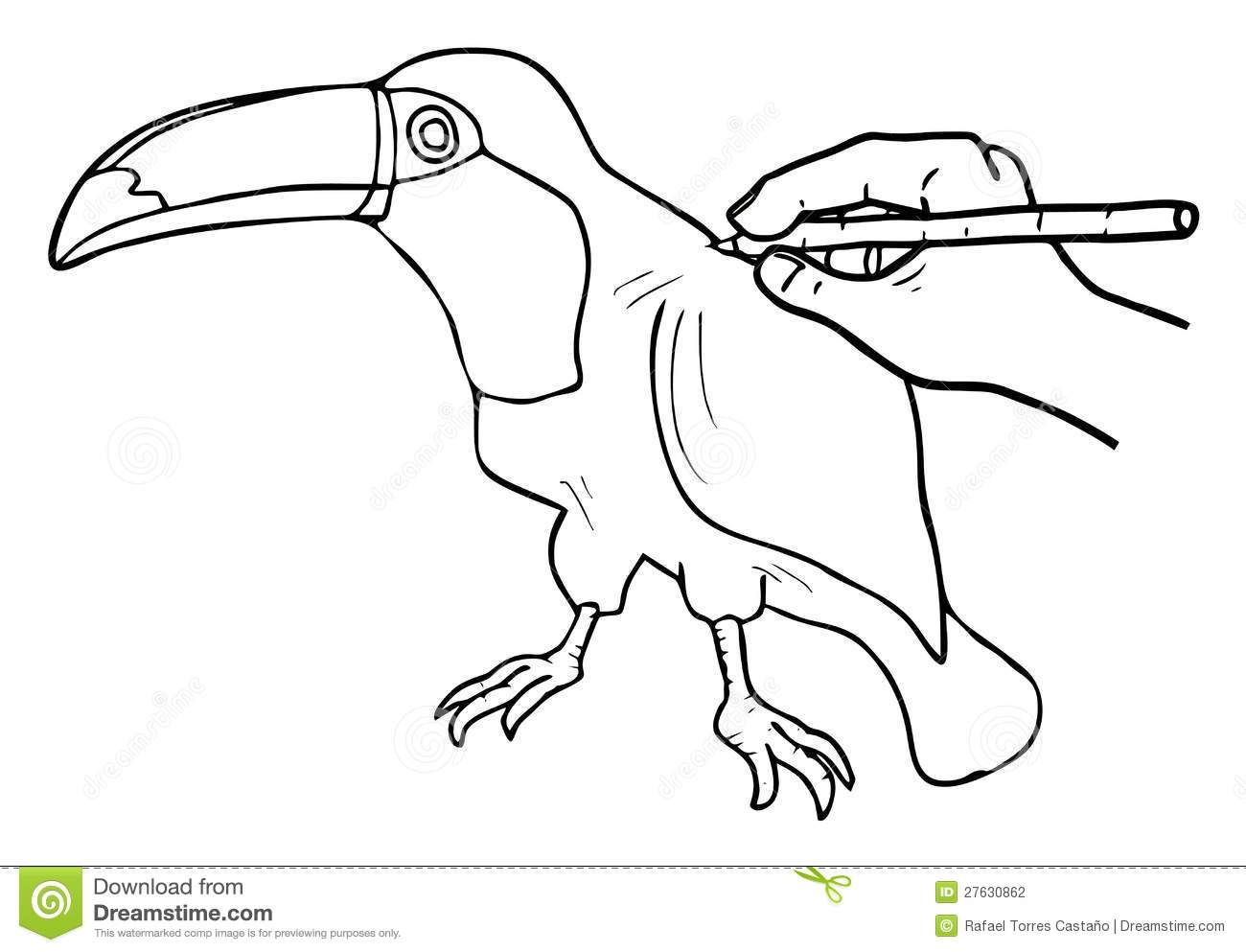 Tucan Drawing Stock Photography