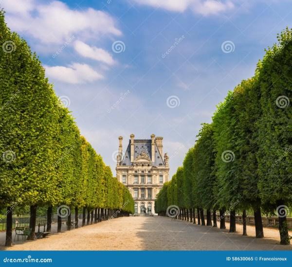 Tuilleries Garden Tree-lined Vista Leading Louvre