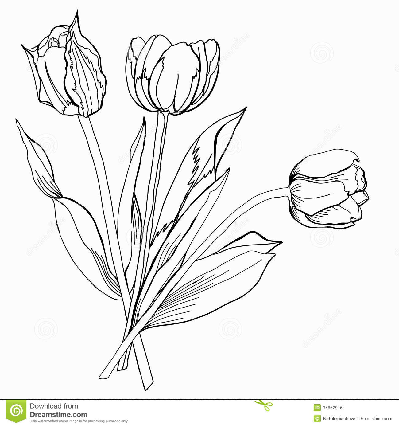 Tulipetch Black And White Stock Illustration
