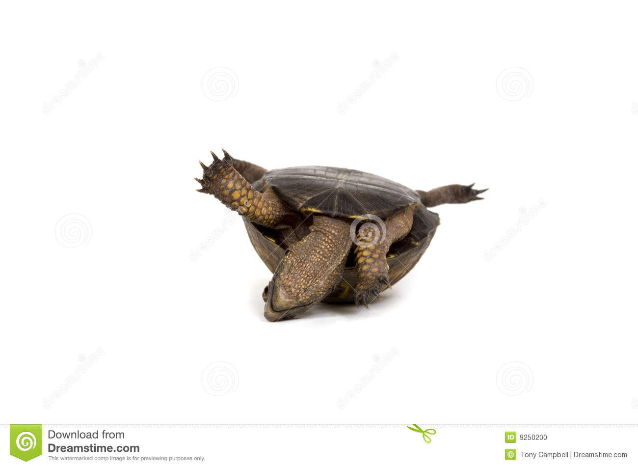Turtle Stuck Its Back