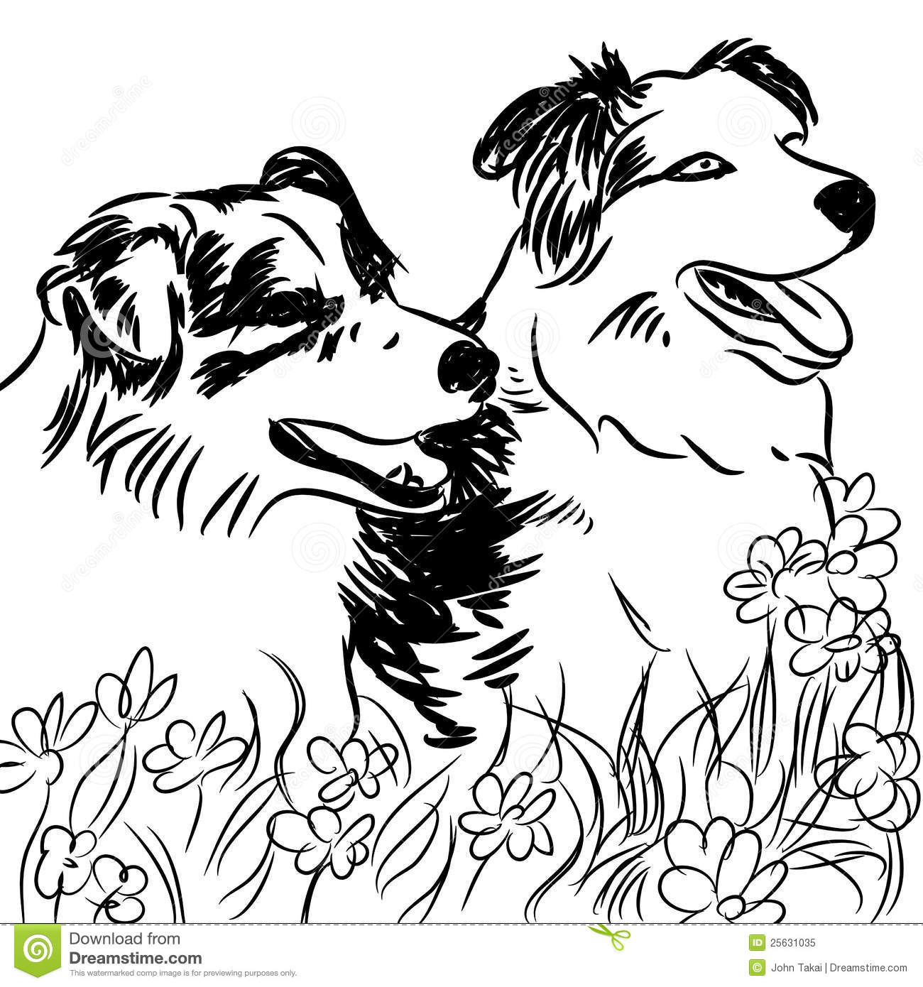 Two Border Collie Dogs In Flower Field Royalty Free Stock