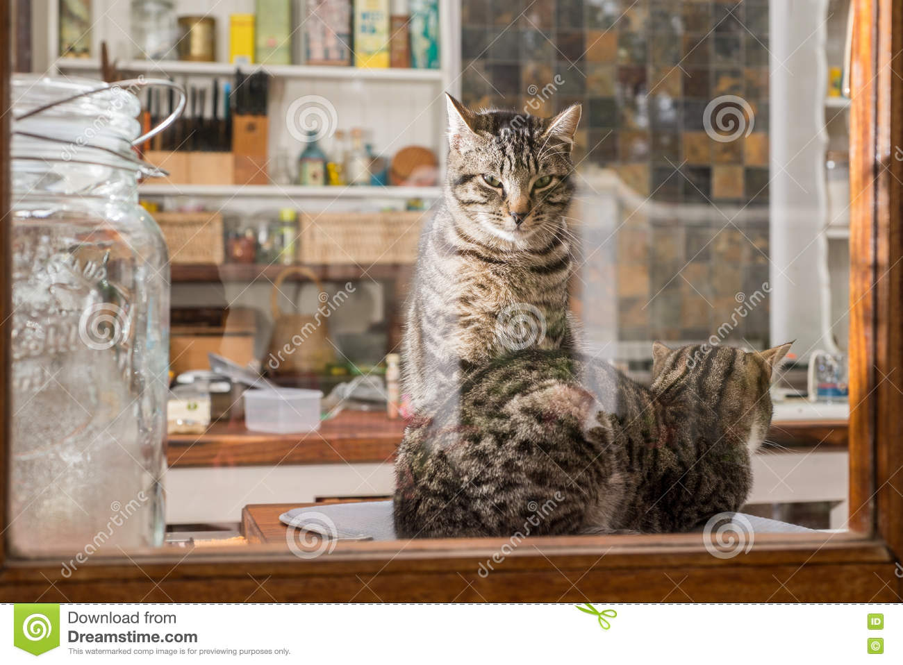 cats in the kitchen cabinet shelving two stock image of friendship 77064405