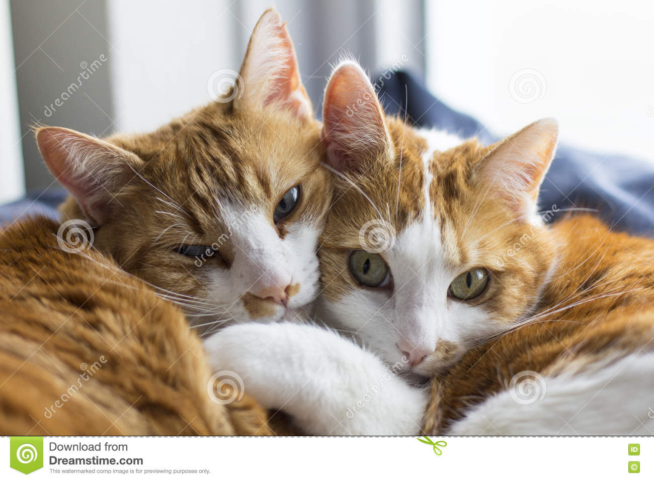 two cute cats cuddling