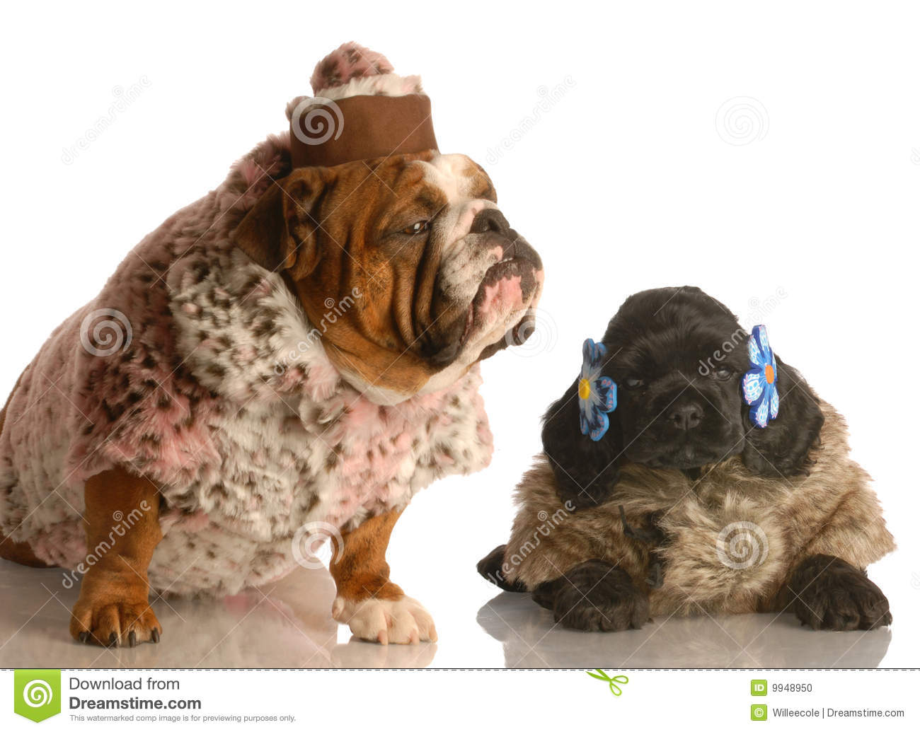 Two Dogs Dressed In Fur Coats Stock Photo  Image 9948950