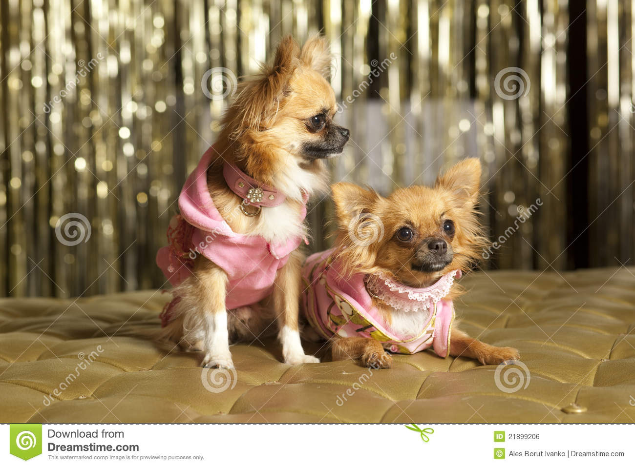 Two Small Dogs In Pink Royalty Free Stock Image  Image