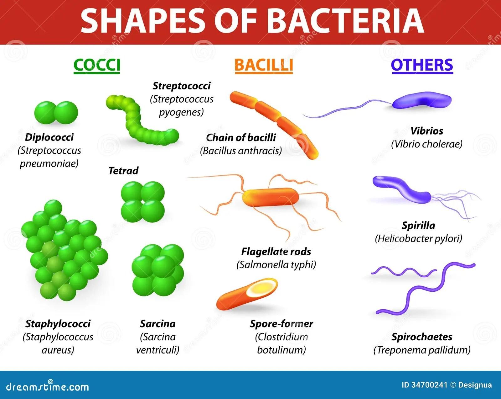 Typer Av Bakterier
