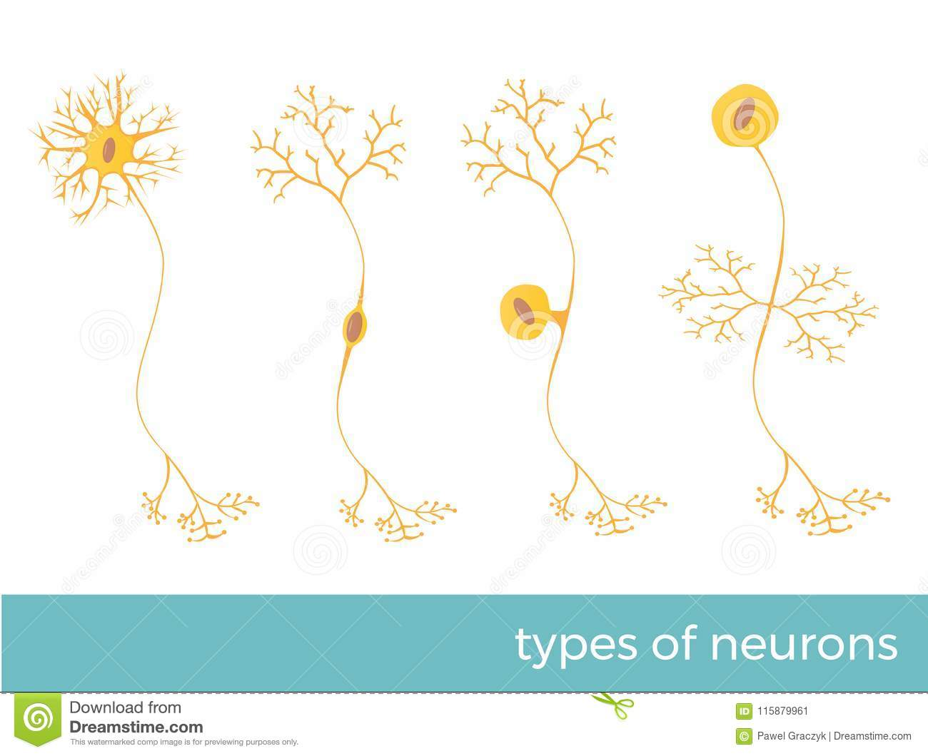 Types Of Neurons Vector Illustration Stock Vector