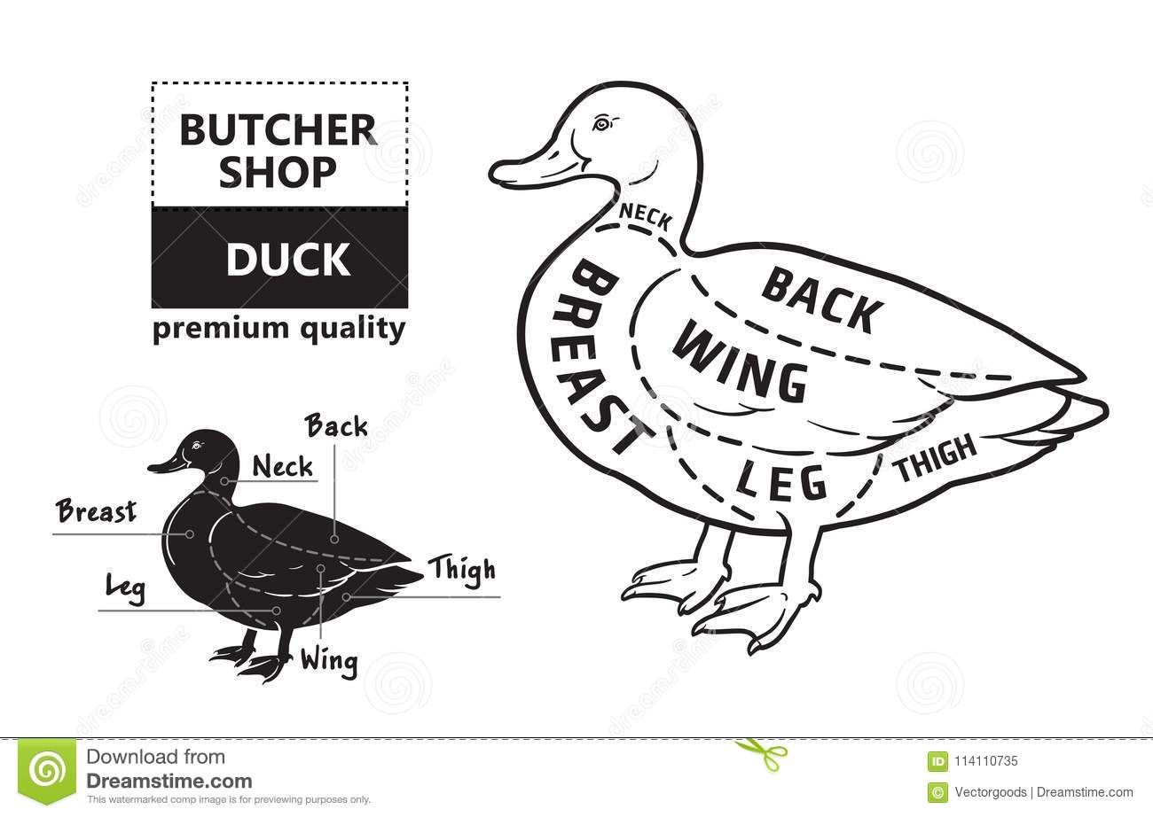 hight resolution of typographic duck butcher cuts diagram scheme premium guide meat label