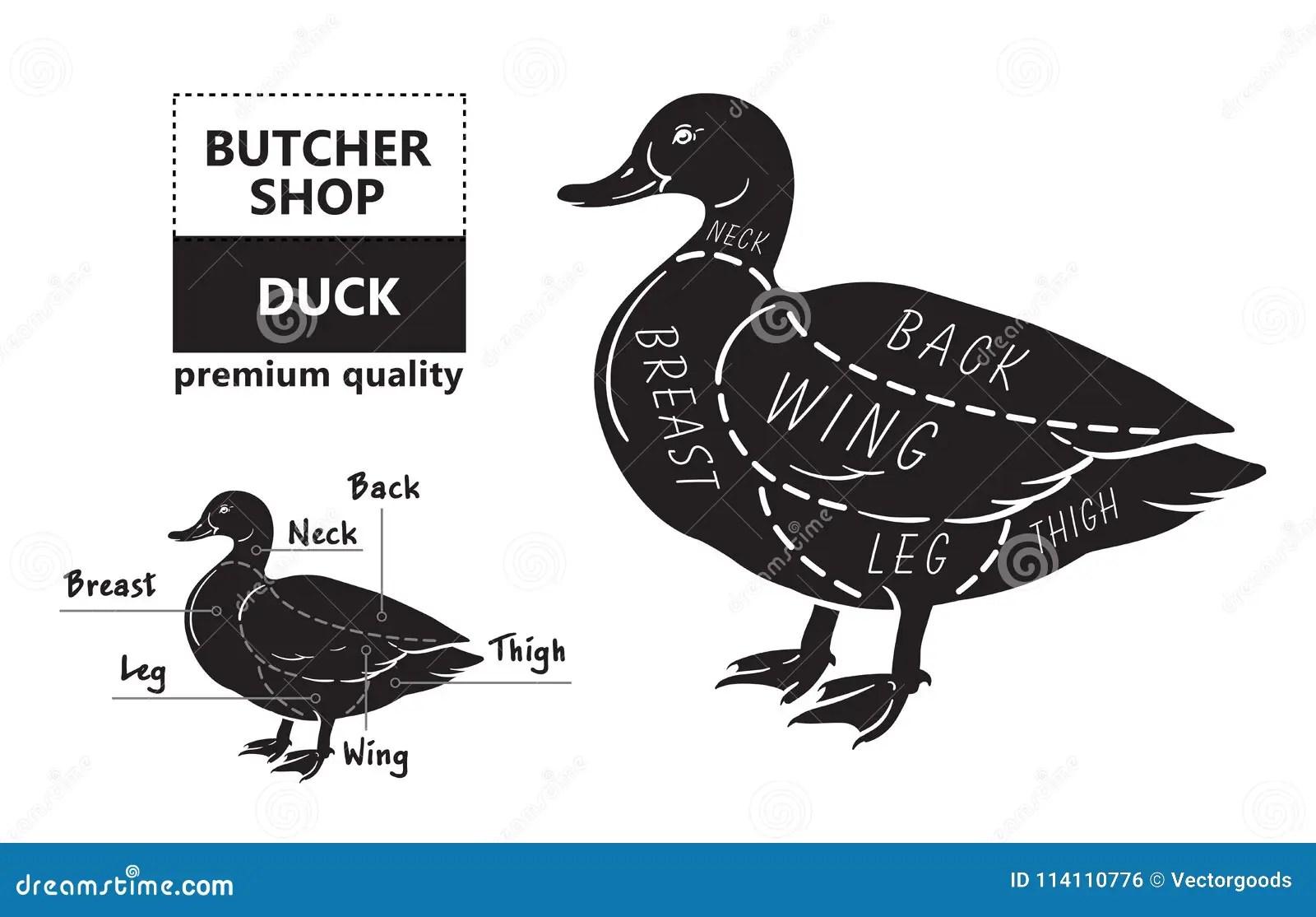 Typographic Duck Butcher Cuts Diagram Scheme Stock Vector