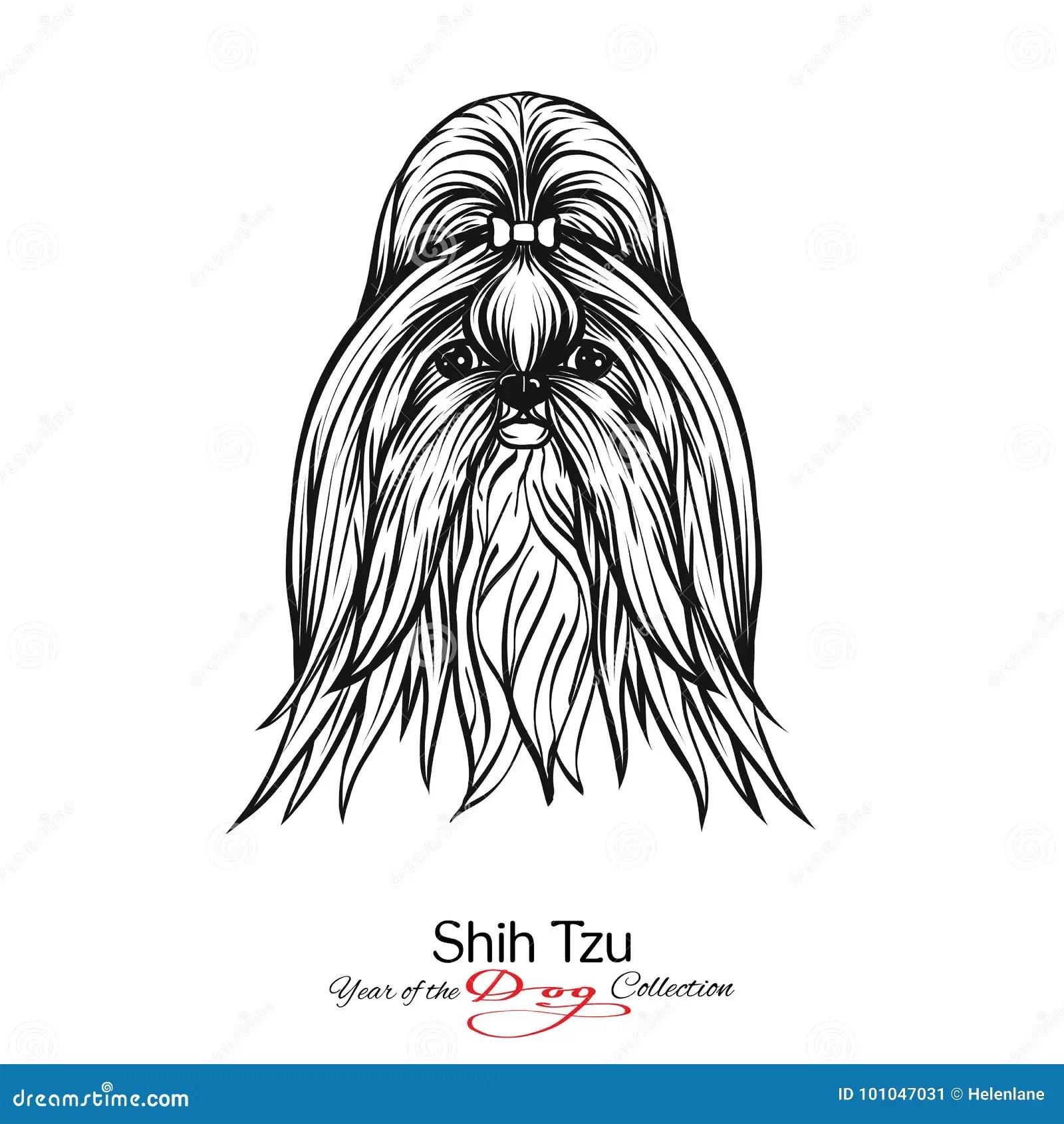 Tzu De Shih Desenho Grafico Preto E Branco De Um Cao