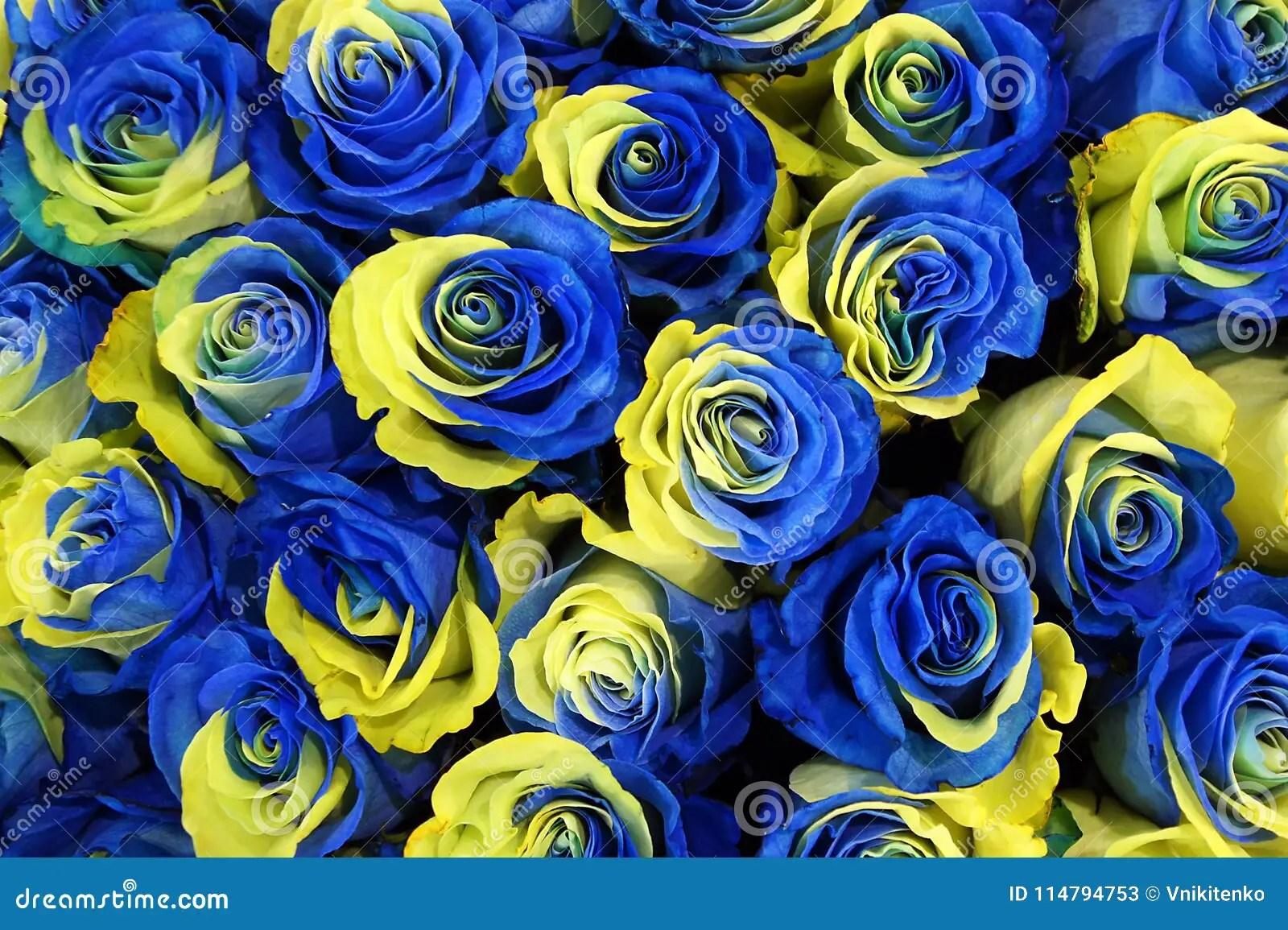 ukraine rose flowers stock