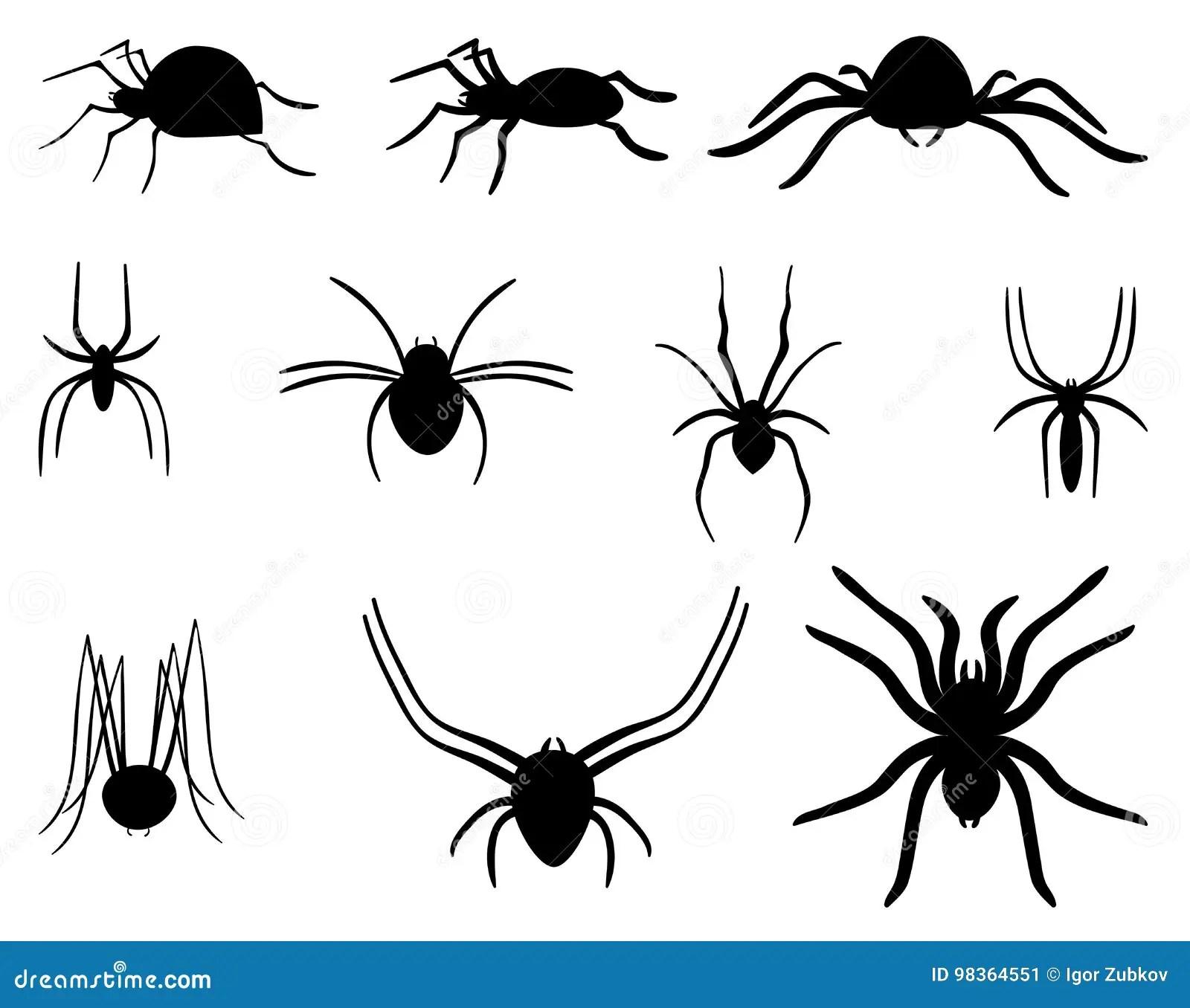 Um Grupo De Aranhas Coleção De Aranhas Preto E Branco