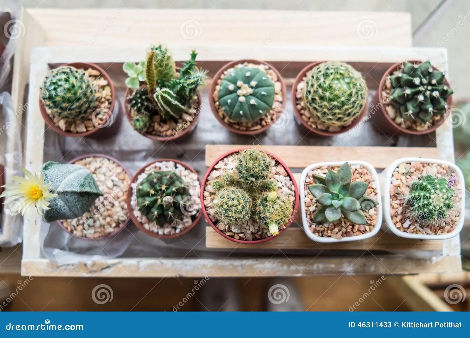 Small Indoor Tree Plants