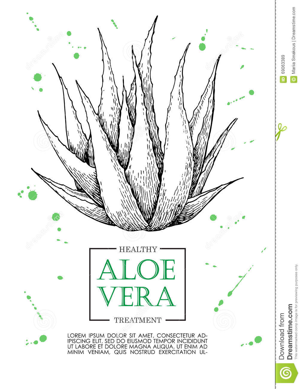 Vector Aloe Vera Hand Drawn Illustrations. Aloe Vera
