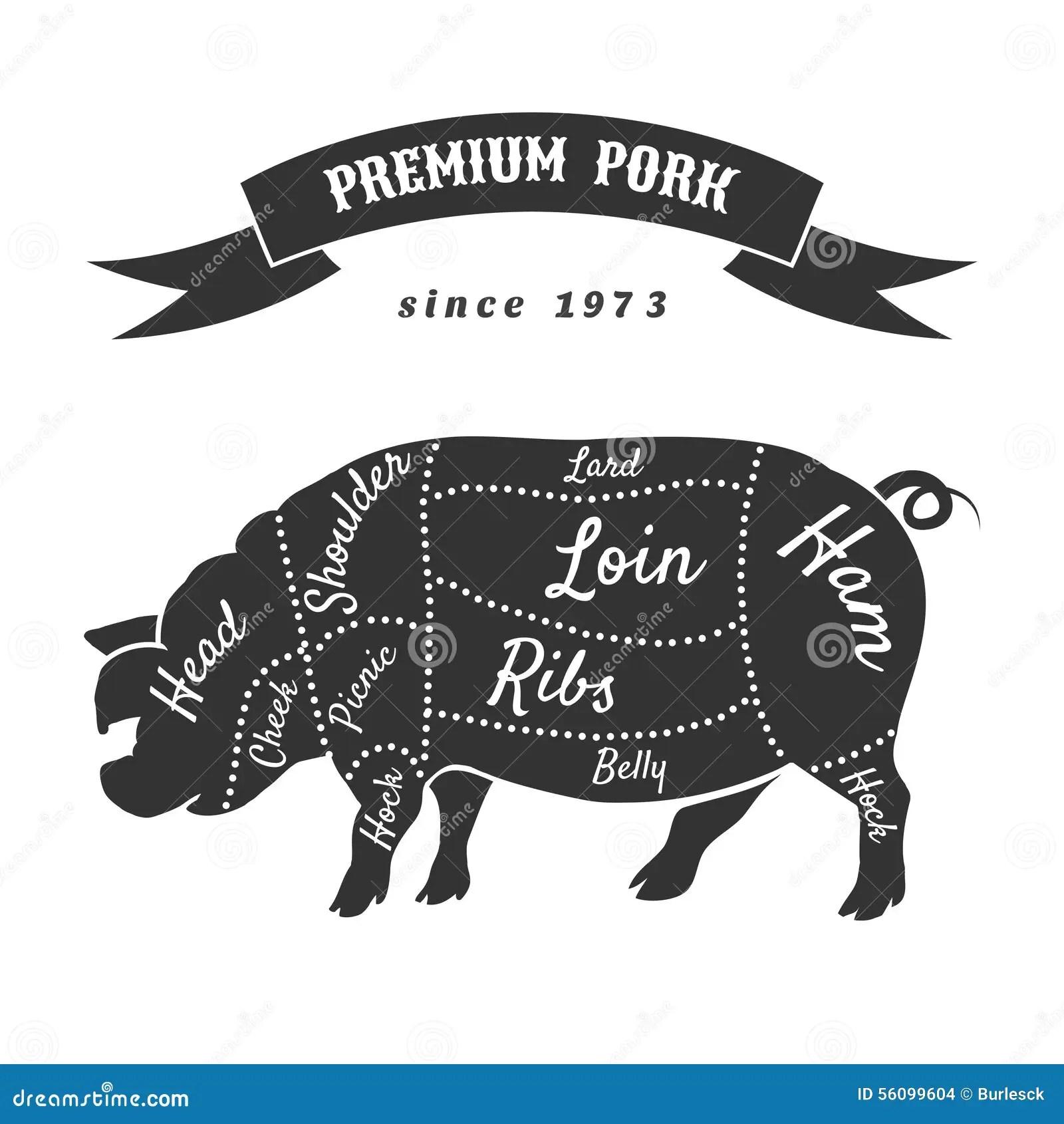 pig cuts diagram 2004 nissan xterra speaker wiring vector of pork or butcher scheme stock