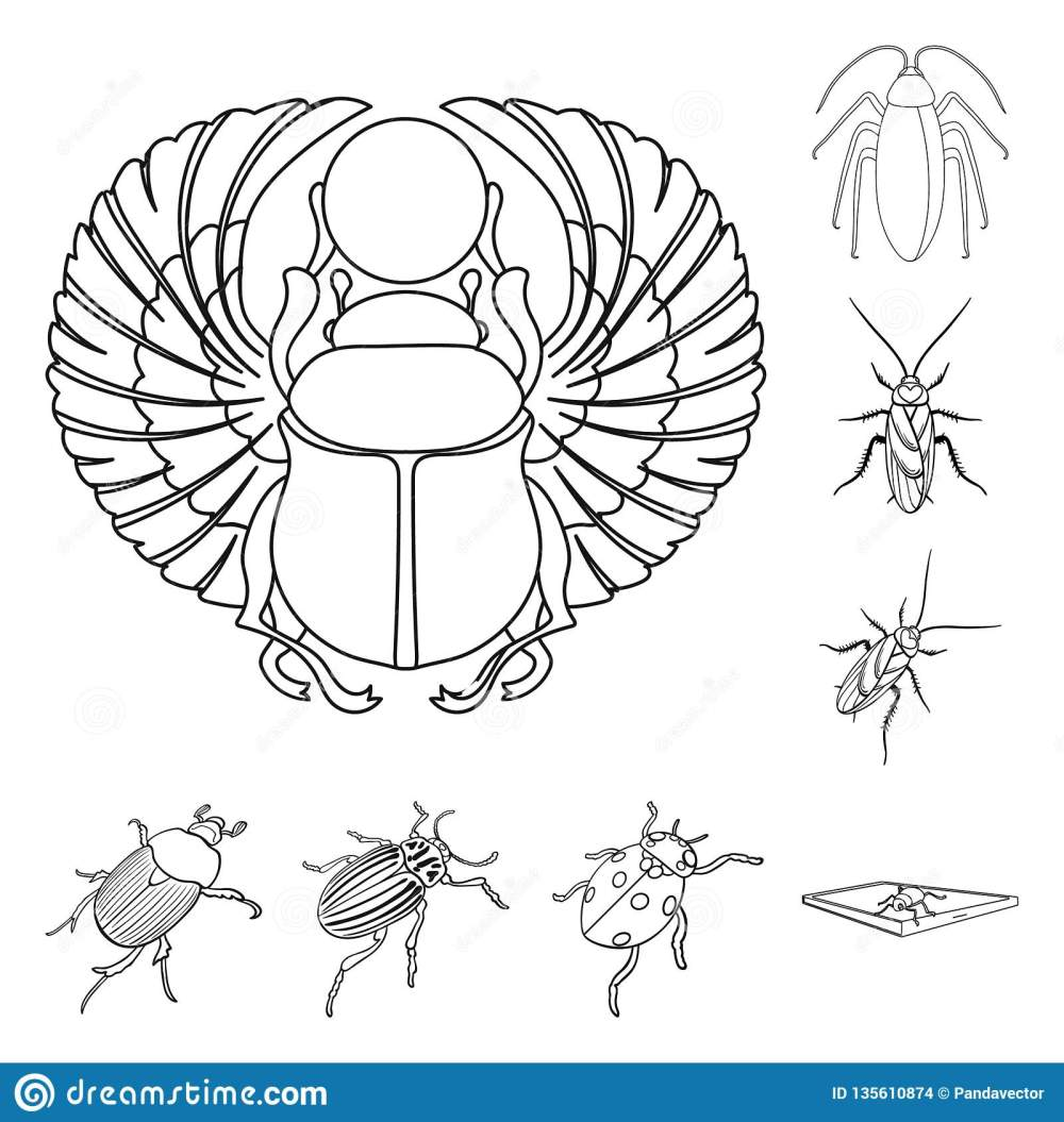 medium resolution of vector design of insect and beetle logo set of insect and halloween stock vector illustration
