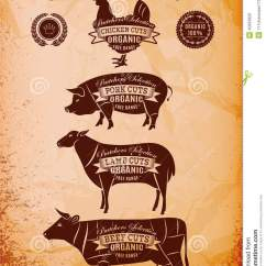 Beef Cow Cut Diagram 2004 Chevy Venture Power Window Wiring Vector Carcasses Chicken, Pig, Cow, Lamb Stock Photo - Image: 40323920