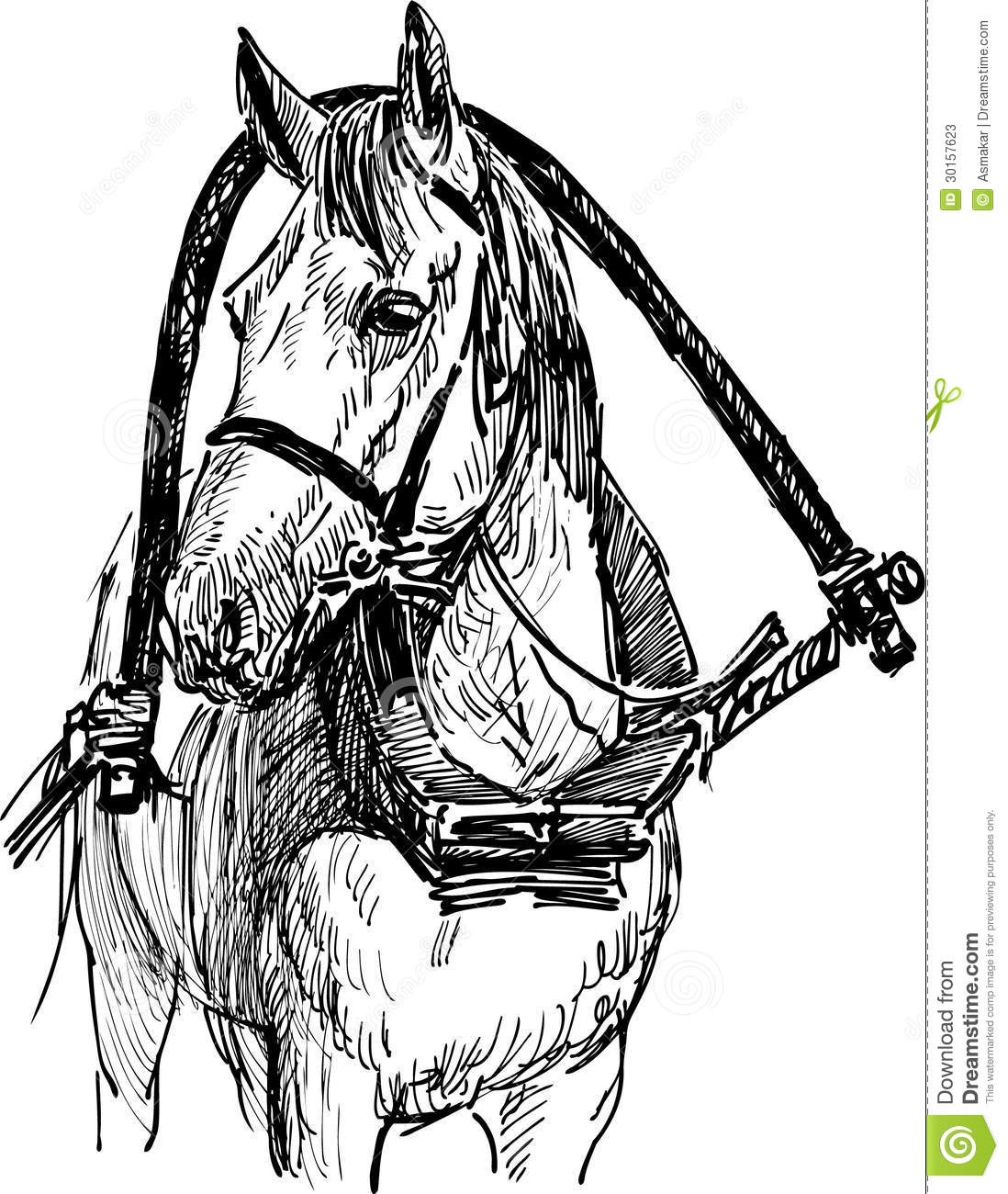 Harnessed Horse Stock Photos