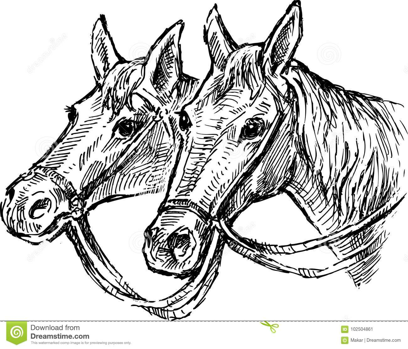 The heads of two horses stock vector. Illustration of