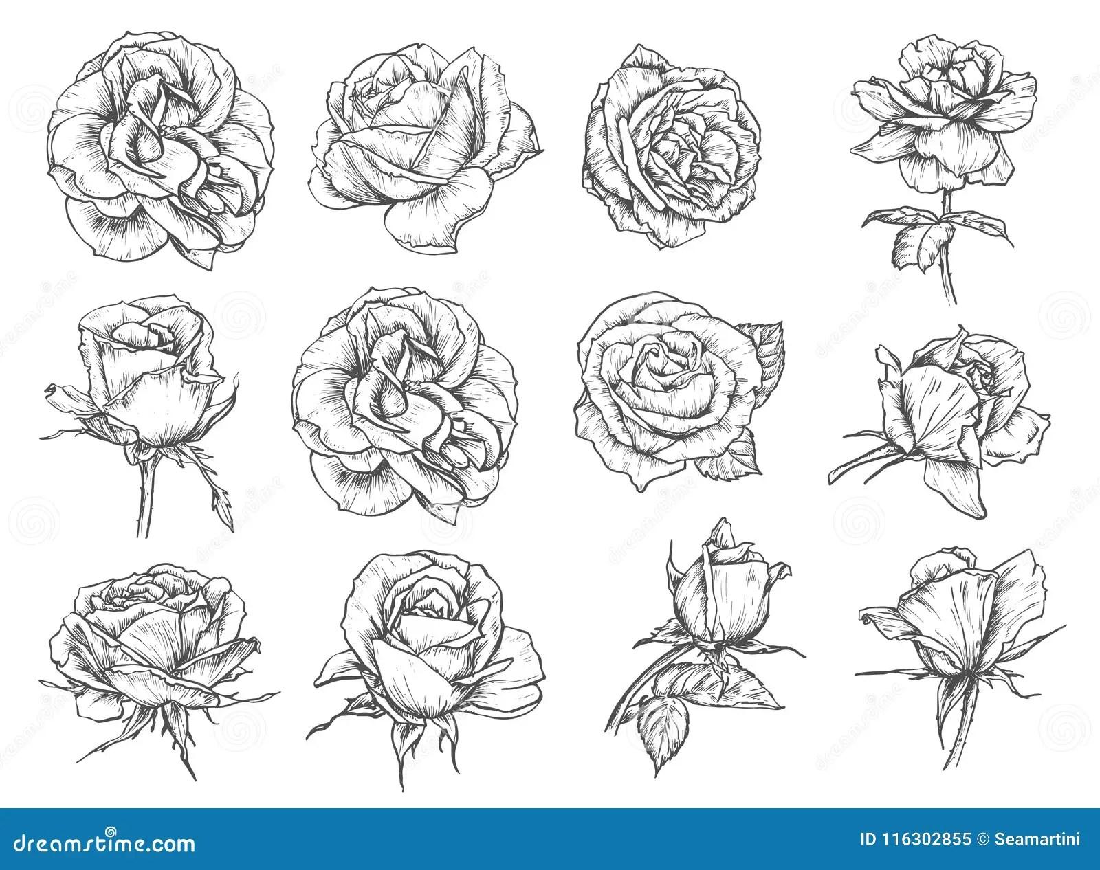 vector flowers roses sketch
