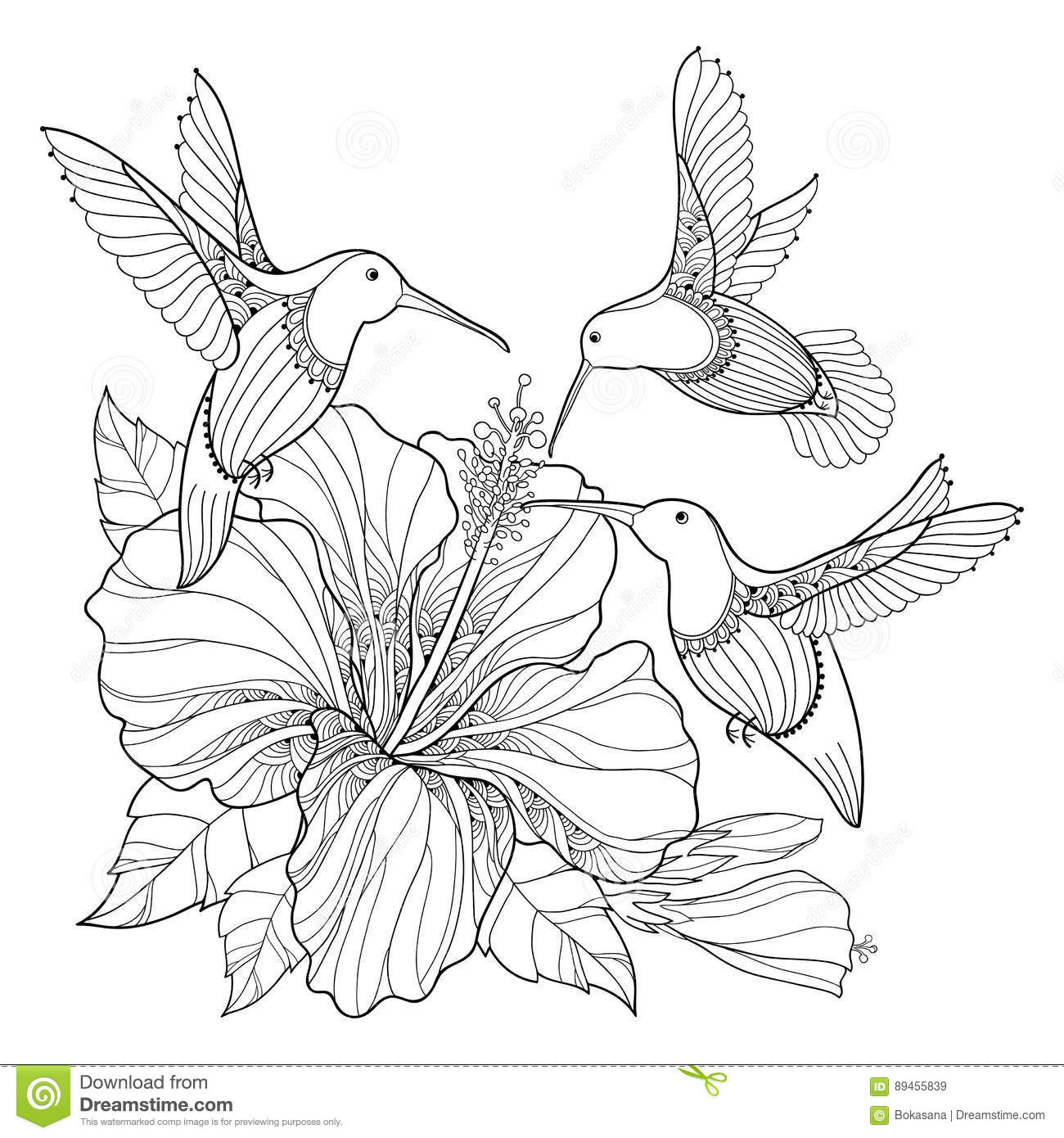 Vector Flying Hummingbird Or Colibri And Ornate Hibiscus