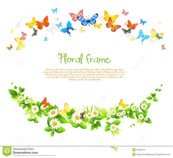 Vector Frame With Beautiful Butterflies And Daisy Stock ...