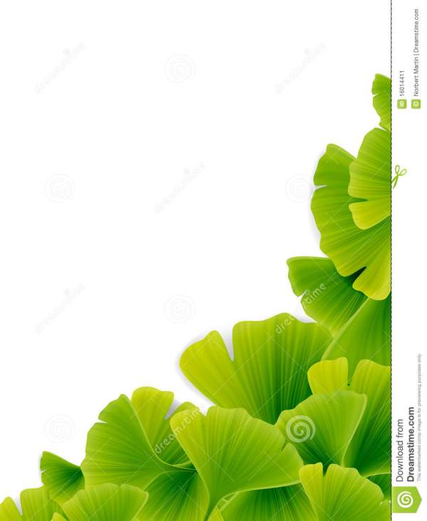 Vector Ginkgo Leaf Stock - 16014411