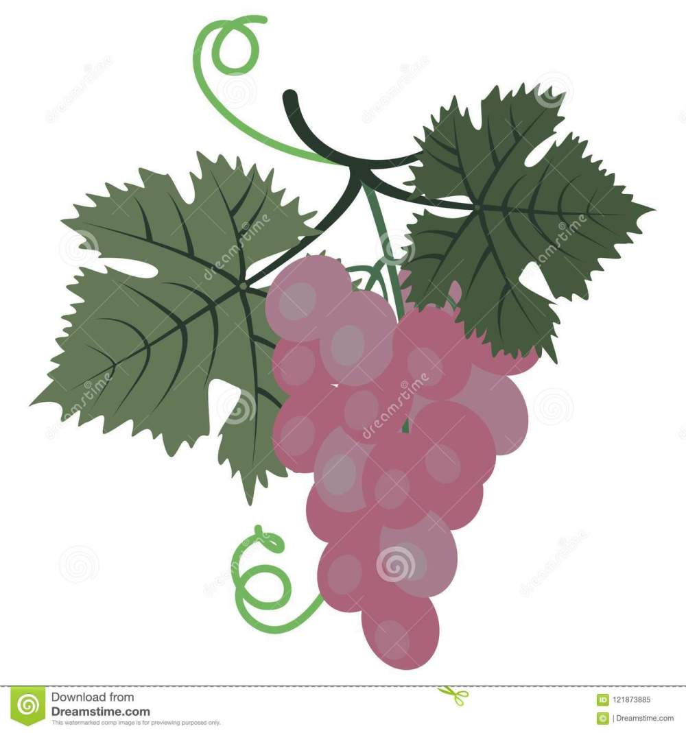 medium resolution of clipart grape stock illustrations 837 clipart grape stock illustrations vectors clipart dreamstime