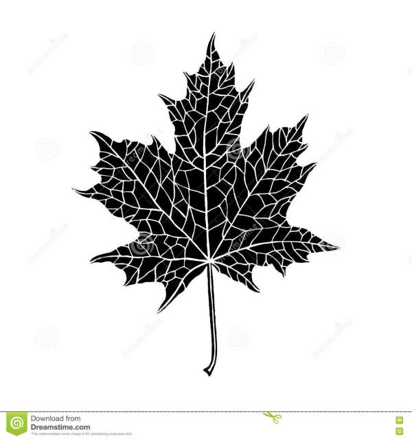 20 Leaf Simple Nature Drawing Pictures And Ideas On Meta Networks